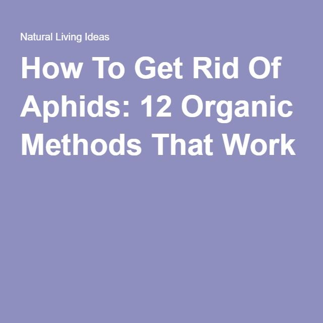how to get rid of aphids 12 organic methods that work. Black Bedroom Furniture Sets. Home Design Ideas