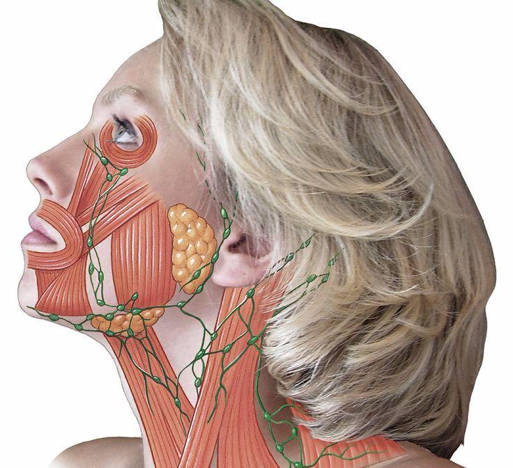 мышцы лица фото картинки шнуров возглавил рейтинг
