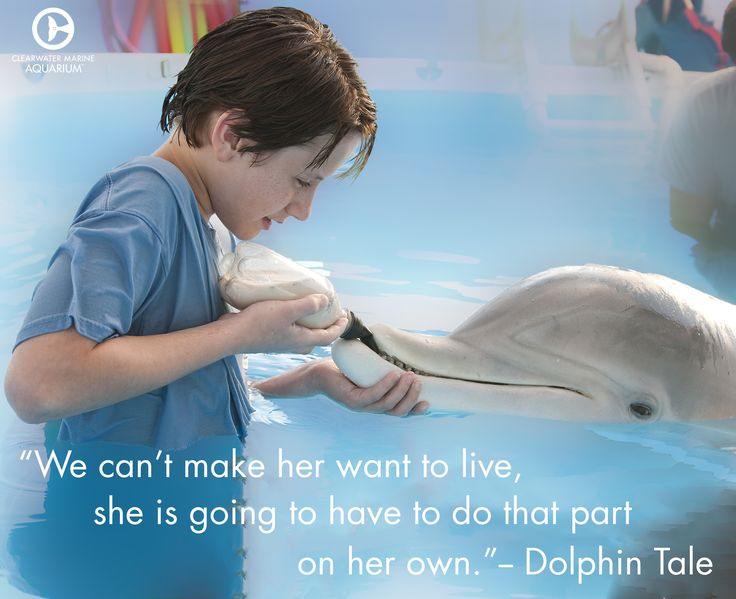 Winter's will to survive is truly remarkable. ‪#‎DolphinTale‬