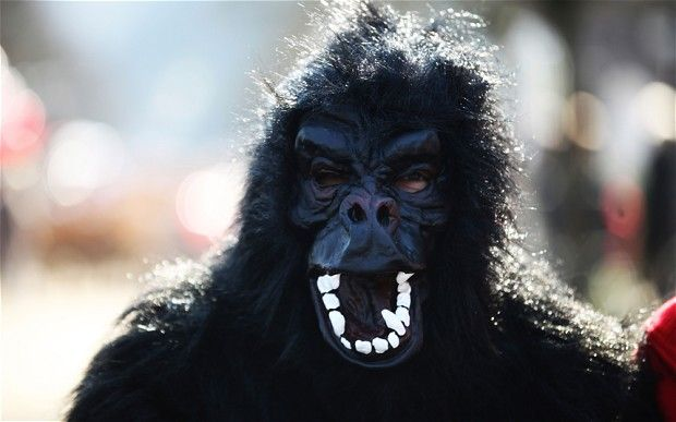 Man in gorilla suit shot with tranquilliser dart at zoo