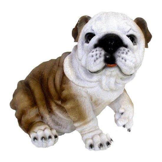 Tuin Bulldog hond beeldje 25 cm  Beeld Engelse bulldog. Dit honden beeldje is een Engelse bulldog en is gemaakt van polystone. Formaat van ongeveer 25 x 21 x 32 cm. Geschikt voor binnen en buiten.  EUR 49.95  Meer informatie