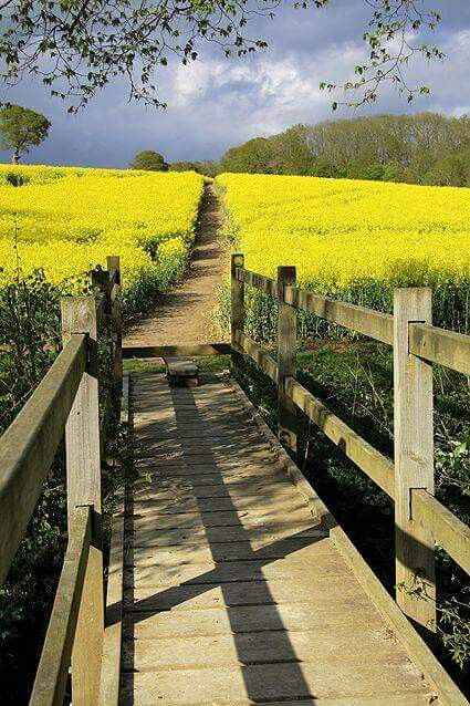 Foot bridge and path through the fields