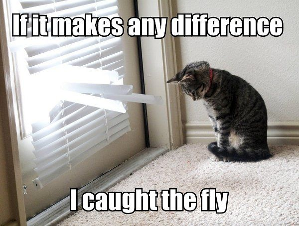 Reminds me of Solita - haha!: Funny Animals, Funny Cats, Fly, Make A Difference, Funny Stuff, Funnies, Smile, Cat Lady