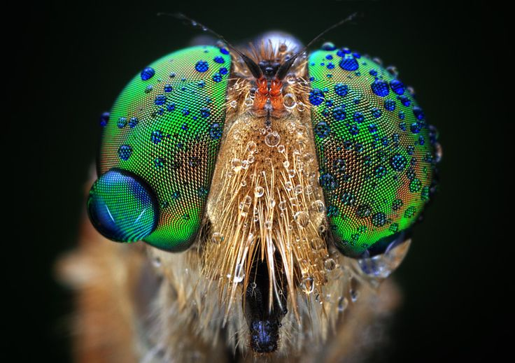 An insect's eyes, with a big teardrop :'( ? Haha, no, that's probably rainwater or dew.