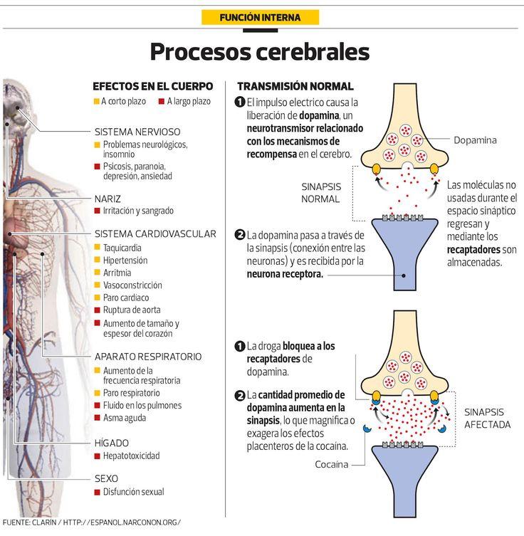 Efectos cerebrales de las drogas