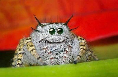 I despise and am terrified of ALL spiders, but for goodness sake, isn't this one just adorable? He looks like he's smiling!