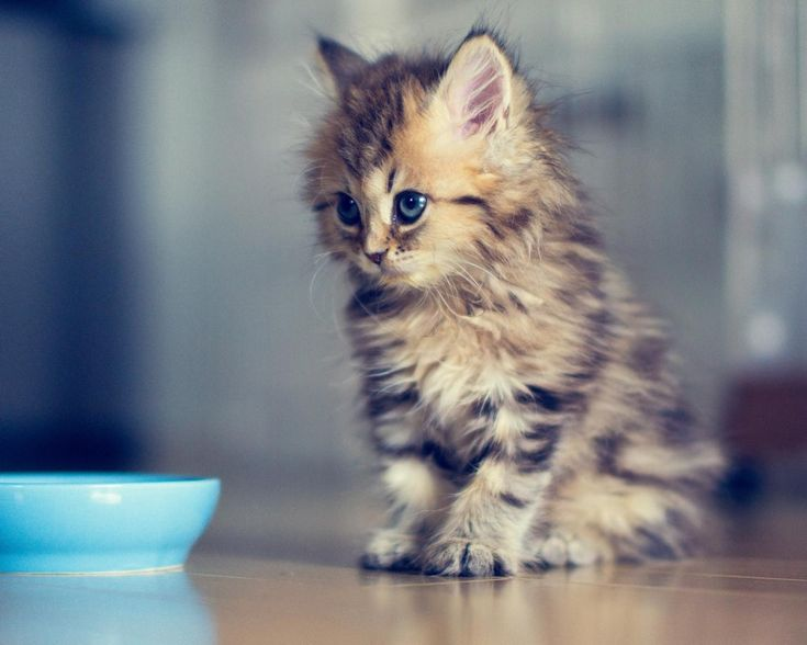 25 Teeny Tiny Kittens Being Adorably Teeny Tiny