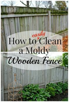 Cleaning a Moldy Wooden Fence