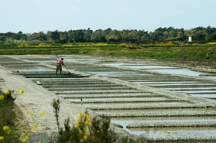 L'Île de Ré : Escale entre terre et mer à La Rochelle - Linternaute