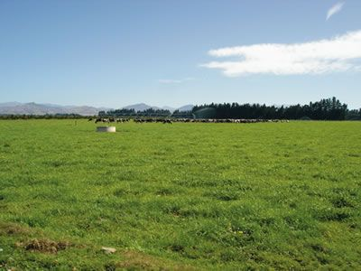 Waibury New Zealand Farm Investments Blog and News Updates, January Update 2014.