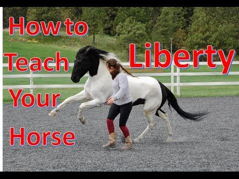 How to Teach Your Horse to do LIBERTY [The first steps of liberty training] - YouTube