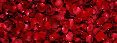 Discover ideas about Red Rose Petals