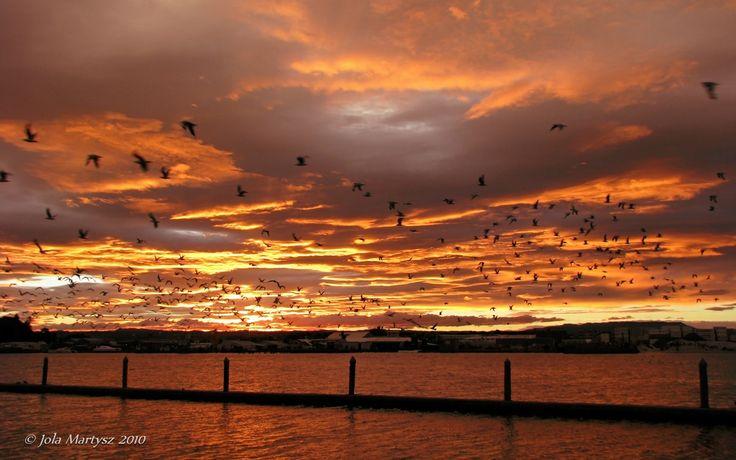 """""""Sunset in Tauranga, New Zealand"""" Camera Canon PowerShot S5 IS, f/4, exposure 1/80 sec, ISO-80."""