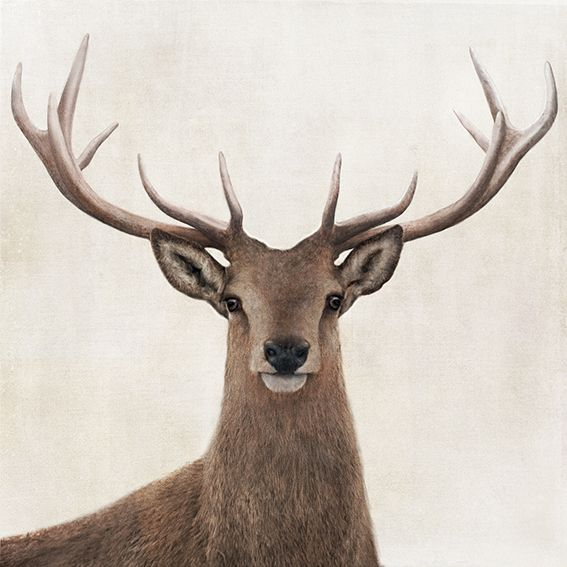 12 Points (A reference to the points of the antlers on this stag) - by RAW + design, a NZ design studio who focus on photographic and illustrative designs. Available as canvas and paper artprints from www.imagevault.co.nz