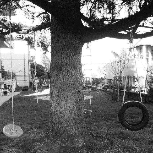 Alberi per giocare #albero #alberomagico #gioco #camminando #giardino #tree #magictree #game #walking #garden #lapartebambinadime #lavitasegretadellepiante