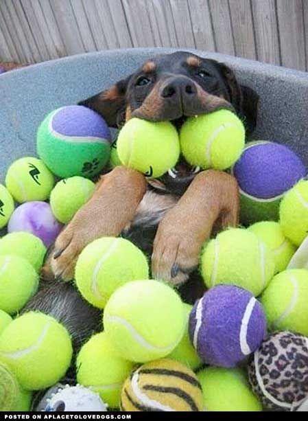 My dog would go craaazy!