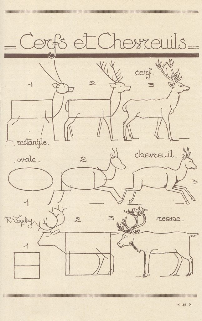 Today's Drawing Class 101: How to draw animals || How to draw a deer