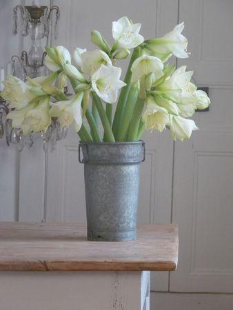 Amaryllis im Winter.  #amaryllis #bouquet #blumenstrauss #amayrllisstrauss  #tollwasblumenmachen