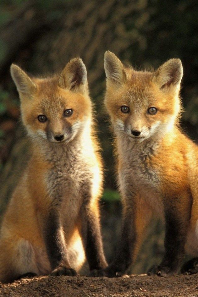 12 Cute Animal Pictures To Save As Your Iphone Wallpapers Baby Animals Pictures Animal Pictures Animal Wallpaper