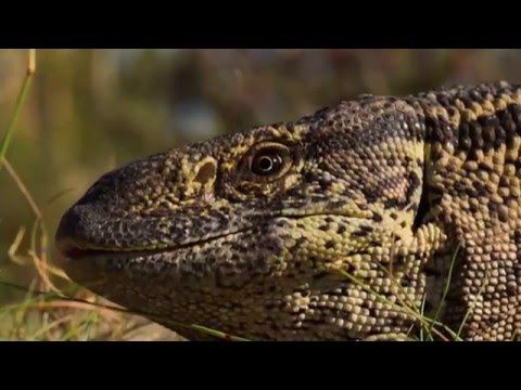BBC Your Inner Fish An Evolution Story - Your Inner Reptile - YouTube