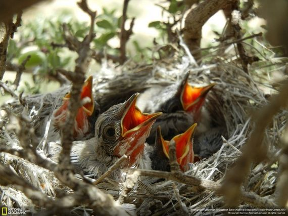 35 fotos de vida salvaje