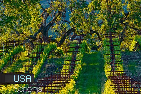 Sonoma County is in good company...Here are the top 14 wine destinations of 2014 by Wine Magazine! Wine Travel Destination 2014: Sonoma, California