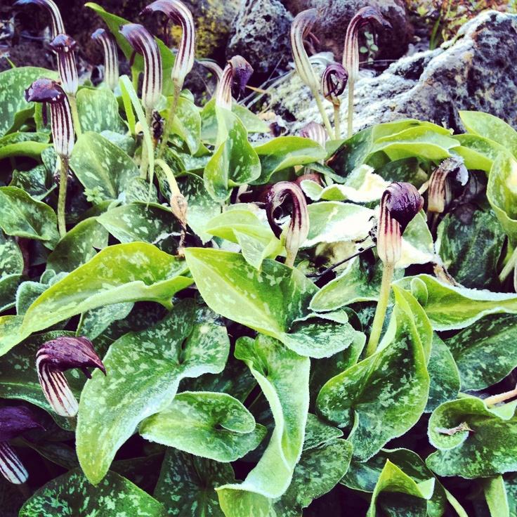 Garden at Wombat Hill House Daylesford