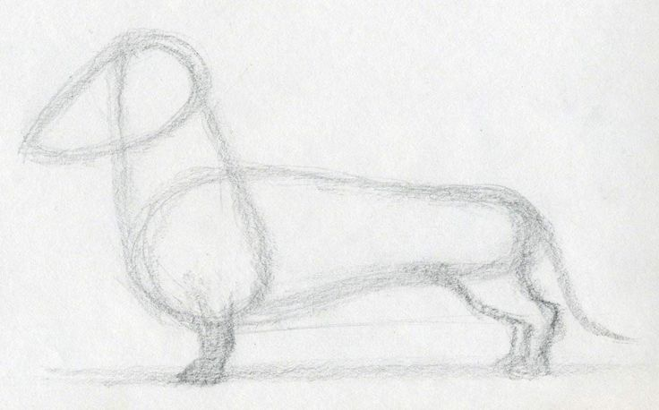How To Draw Dog   Theme of How To Draw Dog, especially how to draw your loved one is I guess among top priorities of every dog lover.   Beli...