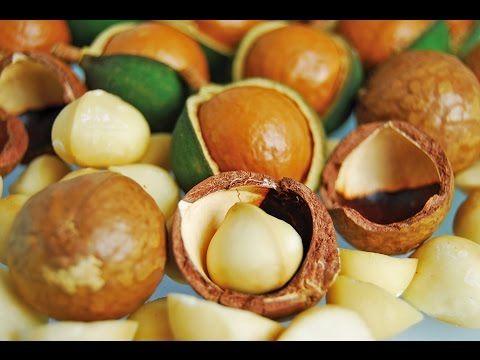 (862) Como Cultivar Macadamia - TvAgro por Juan Gonzalo Angel - YouTube