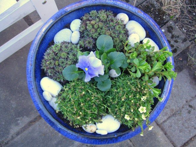 Spring and flowers in a bowl...