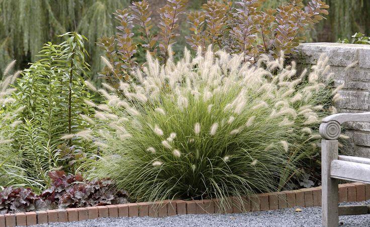 Auch bei einem kleinen Garten ist eine schöne Gestaltung möglich. Gräser bieten …   – Gartenträume