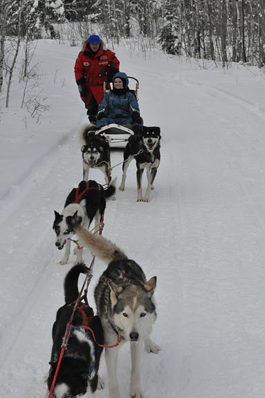 Dogsledding in northern Saskatchewan