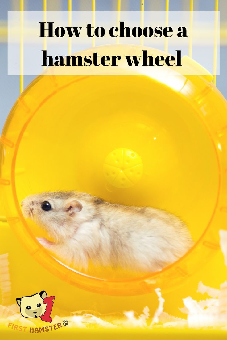 1 The Size Of The Wheel Is Very Important 2 The Type Of The Wheel 3 Mounted Vs Grounded Wheels 4 Noise Level 5 The Hamster Hamster Care Hamster Wheel