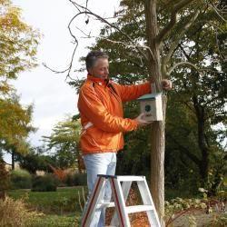 Mann hängt auf Leiter Nistkasten auf