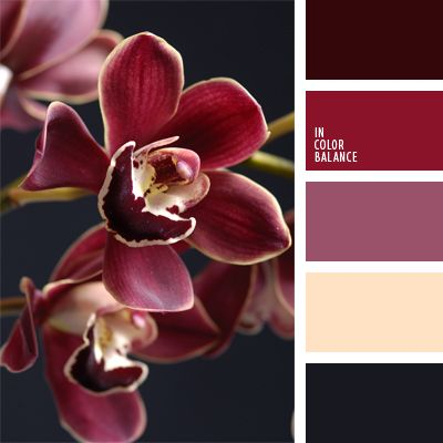 The color palette number 906 beige, burgundy, graphite gray, reddish-purple, cream, deep pink color combination for interior decoration, dark gray, the color of asphalt, the color of eggplant, burgundy color