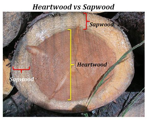 Heart wood and Sap wood   Types of wood  Different types