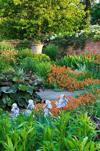 Secret Garden: 567 Best Images About Plant Combinations On Pinterest
