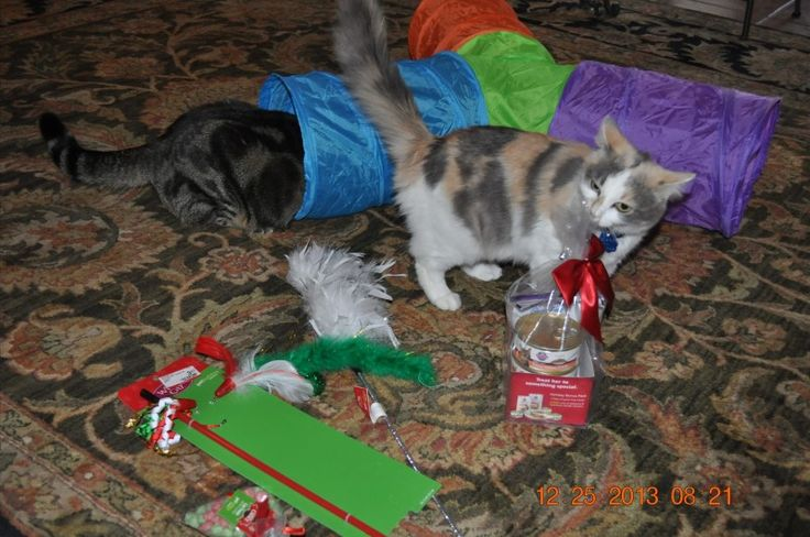Miss Kitty had a good Christmas! So did Trotter!