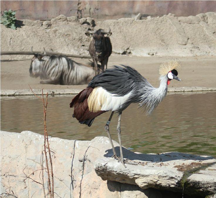 Diferentes especies habitan el Zoológico de Aragón.