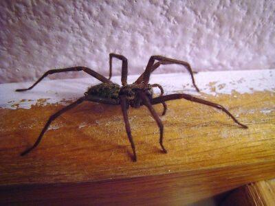 ameisen im wohnzimmer aufstellungsort bild und aeabfbabbfff house spider life tips