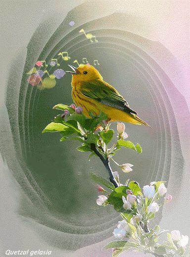 ♥••*´¨`*•.☆• Un hermoso canto de este lindo pajarito!!!!! - Martha Cecilia Valencia - Google+
