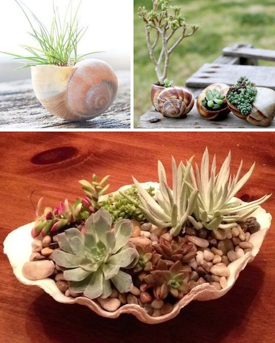 Shell Planters Put all of those collected shells to use! Place them in your garden or use them as a table centerpiece.