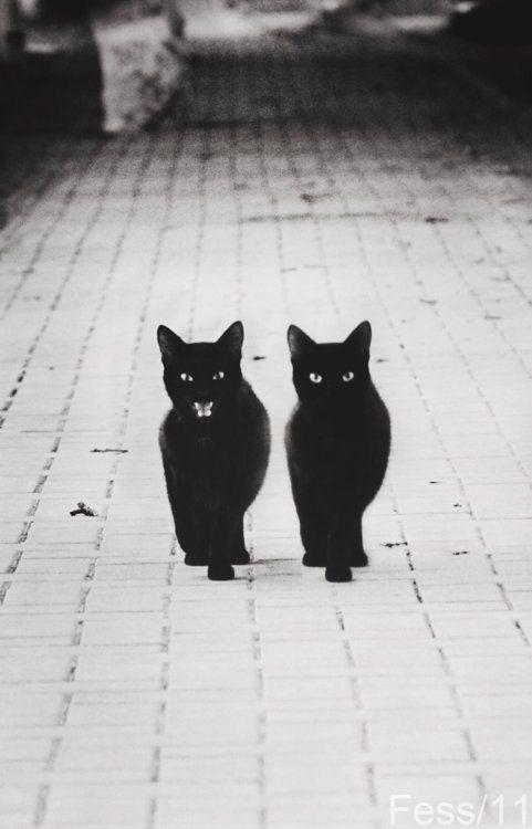 Les albums de Céline E.: Black Cat - Opus 5