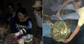 Muerte de tortugas en Oaxaca fue causada por parásito