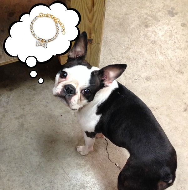 Pickles is one of our favourite studio dogs! He wants what we all want...jewellery!