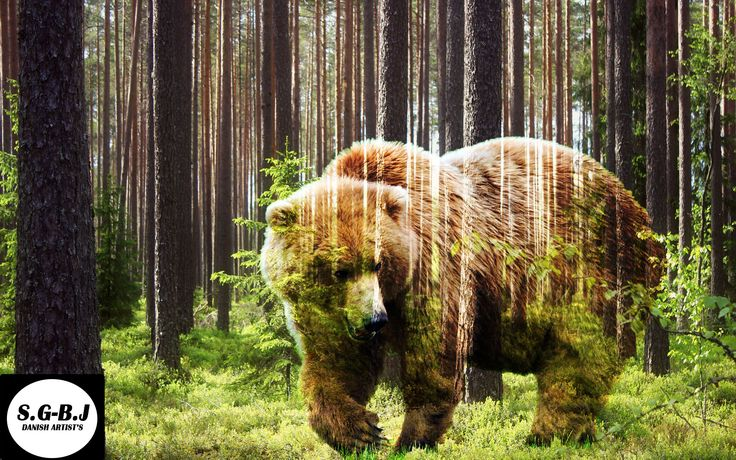 Bear in a Forrest - S.G-B.J