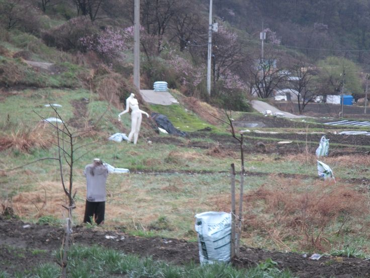 The weird and strange!  We found these in a random field on the way to a pension near Daejeon Dam in Daejeon, South Korea.  Someone's idea of art? scarecrows? zombies?