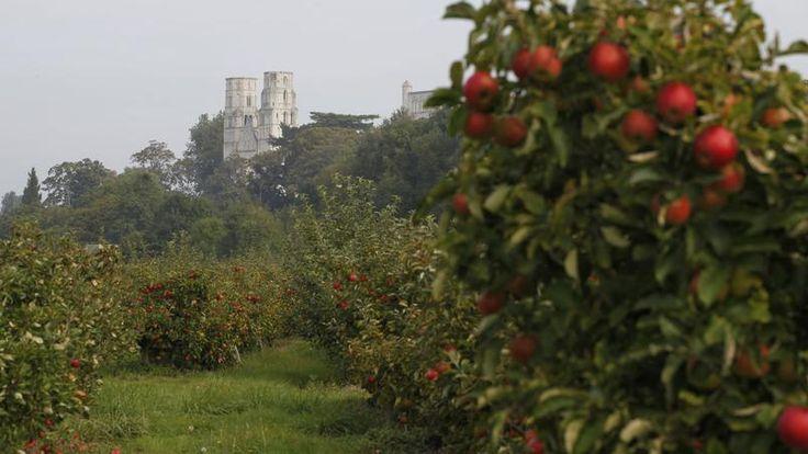 L'abbaye de Jumièges surplombe des vergers qui sont chargés de pommes pendant tout l'automne.