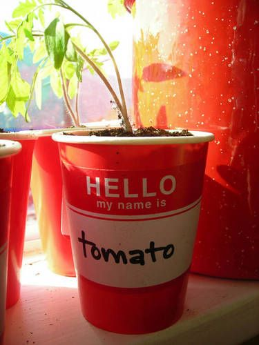 Such a cute idea when doing seedlings: Solo Cup, Cute Ideas
