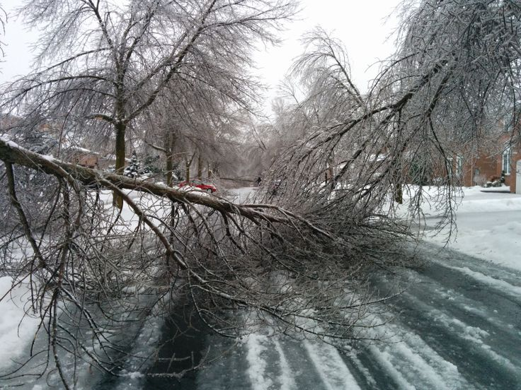 Damaged trees from the ice storm #icestorm #toronto